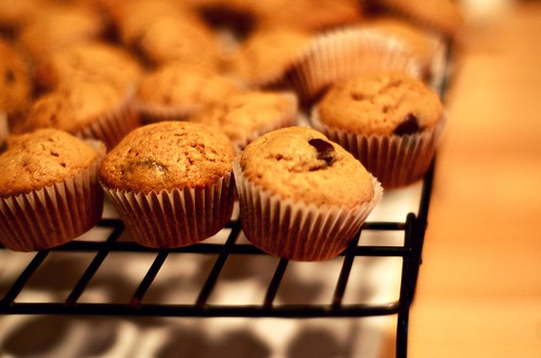 cute, warm, melty, chocolatey, peanut buttery mini cupcakes