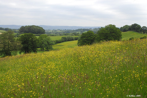 Through the Buttercups and Up Into The Hills and Beyond