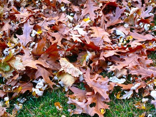 leaf-o-rama