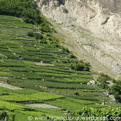 Schweizer Weine 2_2009 08 04_1917