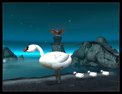 Swan Troop