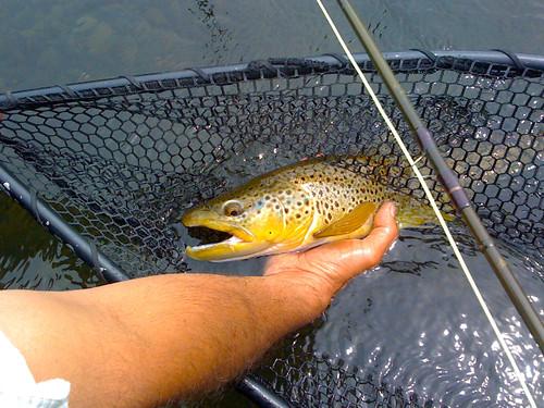 Delaware River Fly fishing