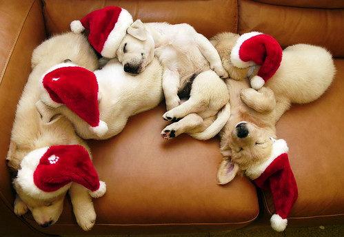 sleeping santa dogs por chotda.