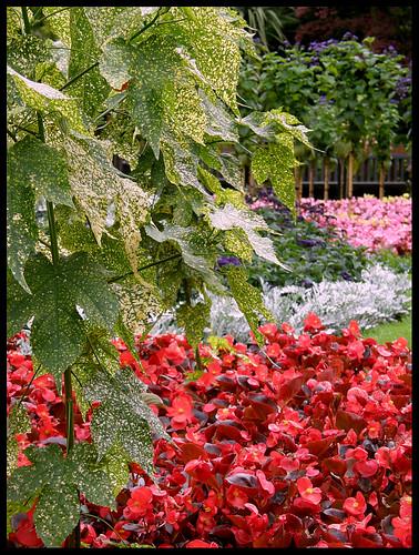 Dingle Garden, formal beds