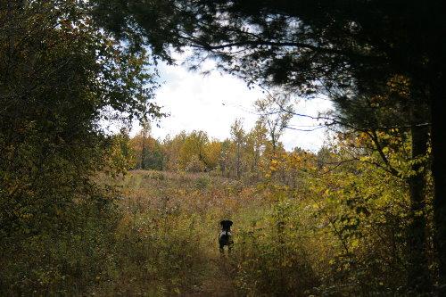 woods22