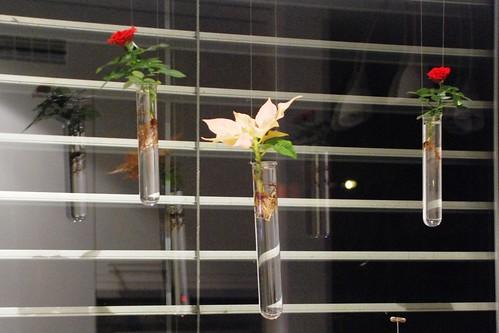 Reagenzglas_Pflanzen_07