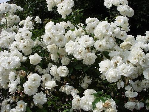Des fleurs, Blandy Les Tours
