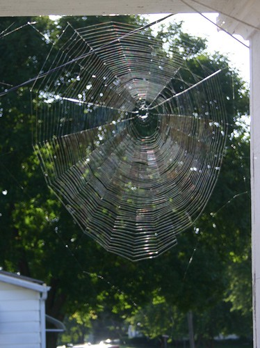 The morning light hit this lovely spider web on my porch just right.