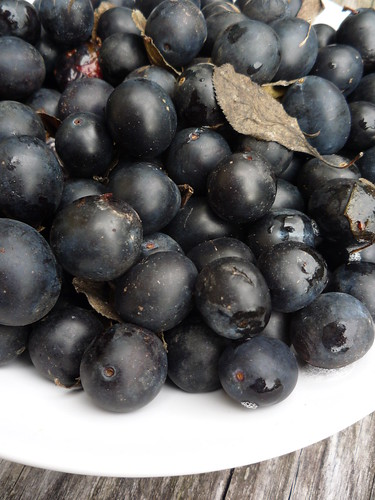 Damson by you.