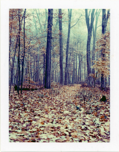 Leaves over the path