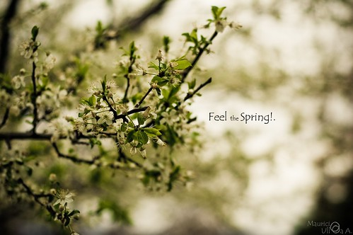 Feel the Spring!.