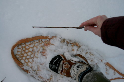 Six inches of snow under the snowshoe