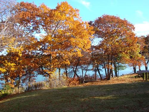 Beautiful fall, beautiful backyard.