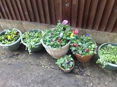 My Flower Tubs