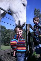 Horse kiss for Tash