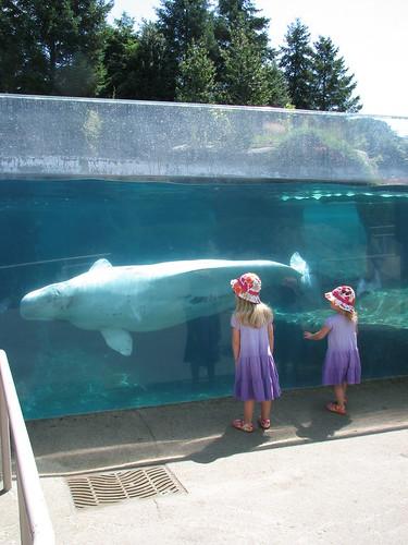 beluga by you.