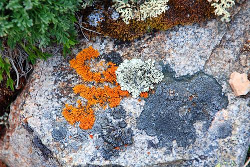 Orange Moss