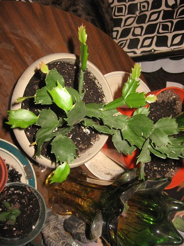 plants (5)