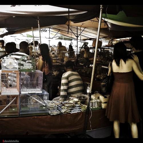 Pets stall at Gaya Street