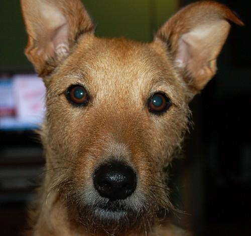 Wilson the Dog