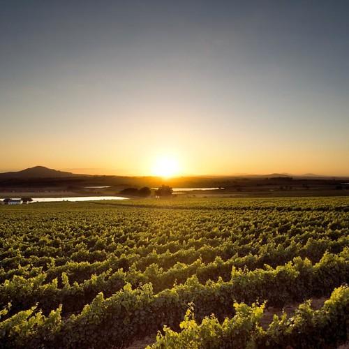 Seidelberg Vineyards