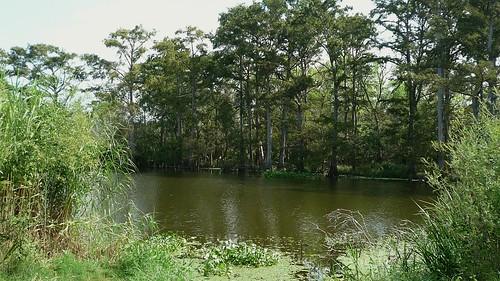 Roadside view, Hillebrandt Bayou