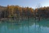 Photo:blue pond (autumn) By