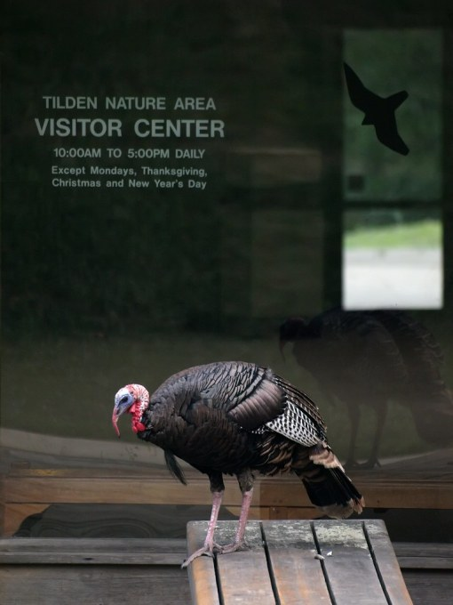 Visitor Center Closed