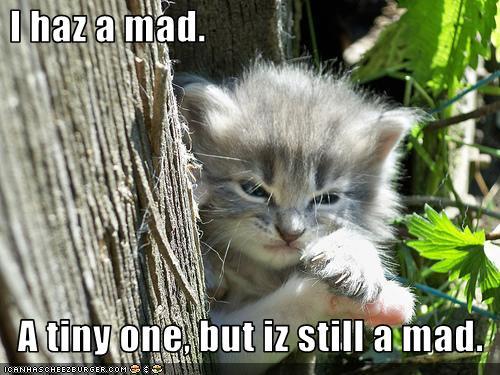 I am a little kitten