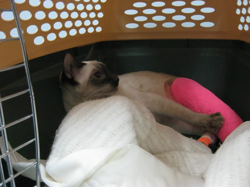 Cinny after seeing the overnight emergency vet...