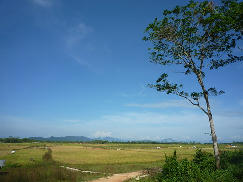 Reisfelder auf Koh Yao Noi 2