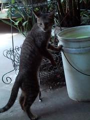Drinking Cat [2009-1202] 002