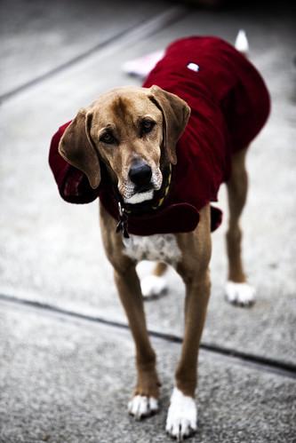 Grifter Dog the world's best dog!