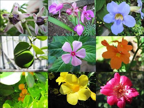 local_flora_small