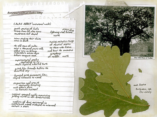 CALKE ABBEY: I remember Q had to write to his mom in UK to pick up  some oak leaves in the paddock