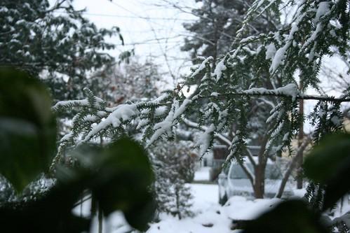 Snow in Walla Walla