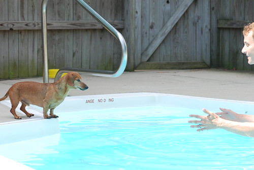 Trying to coax Petie into the pool
