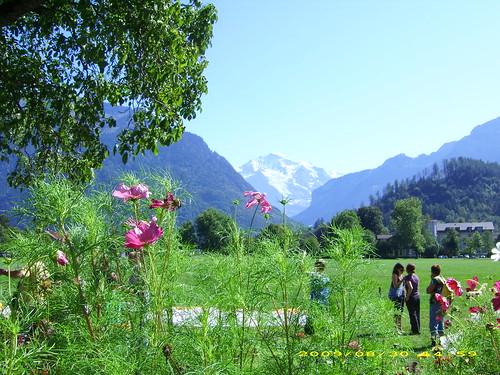 Interlaken Wiese