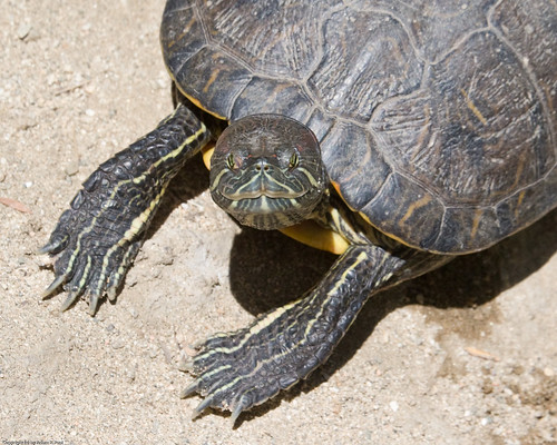 Turtle by you.