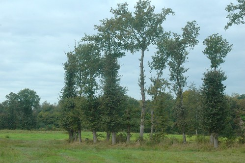 arbres démonde (shred trees)