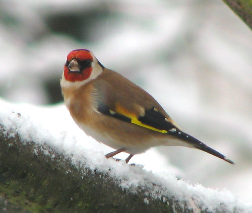 My Winter Bird Garden with Snow ~ Worcestershire January 2010 by simball.