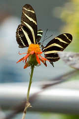 Rainforest Butterfly 2