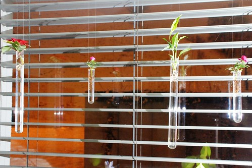 Reagenzglas_Pflanzen_05