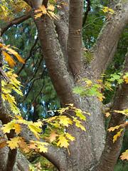 Autumn and Oak