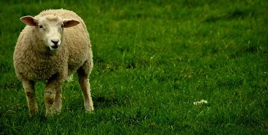3987719525_8c6ed65933_o Avebury Ring  -  Wiltshire, England UK West Country  Wiltshire Neolithic National Trust Megaliths Avebury