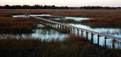 Charleston, SC - Marsh