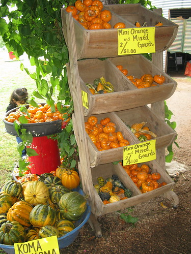 Pumpkin/Gourd Varieties