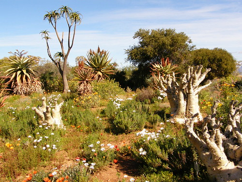 Jardín botánico del karoo, Worcester