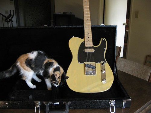 Xaviere tele being inspected by Boojie the cat
