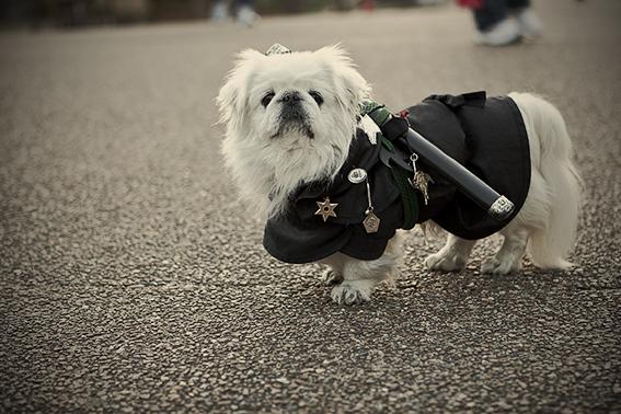 Ninja dog